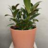 Indoor plant delivery