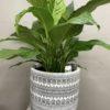 Indoor plant Mount Martha