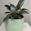 Indoor plants delivery