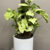 Ceramic pots indoor plants